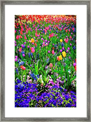 Field Of Flowers Framed Print by Tamyra Ayles