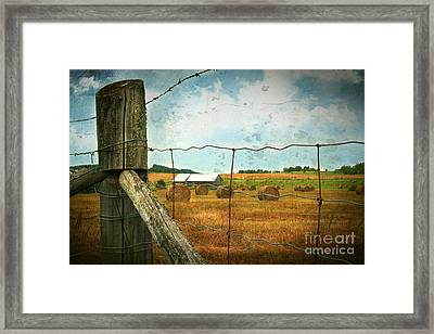 Field Of Freshly Cut Bales Of Hay Framed Print