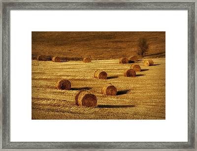 Field Of Gold #1 Framed Print by Nikolyn McDonald