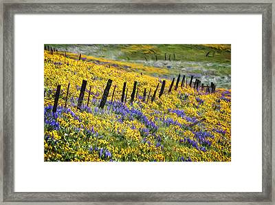 Field Of Gold And Purple Framed Print by Wes and Dotty Weber