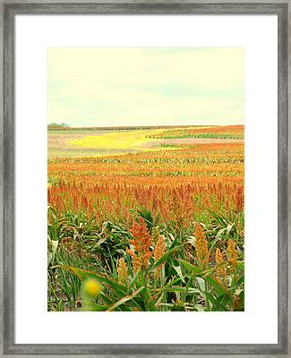 Field Of Gold Framed Print by James Granberry