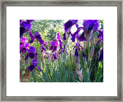 Framed Print featuring the digital art Field Of Irises by Barbara S Nickerson