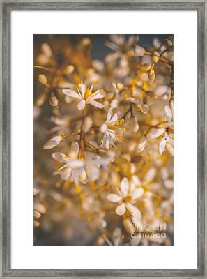 Field Of Kindness Framed Print