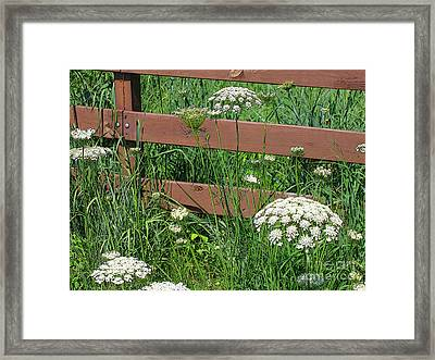 Framed Print featuring the photograph Field Of Lace by Ann Horn