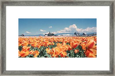 Field Of Orange Framed Print by Ansel Price