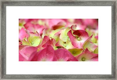 Framed Print featuring the photograph Field Of Petals by Corinne Rhode