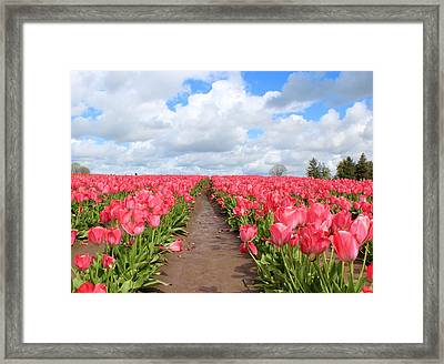 Field Of Pink Framed Print