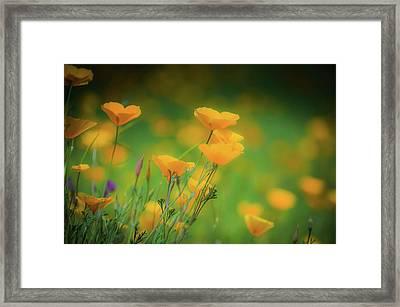Field Of Poppies Framed Print