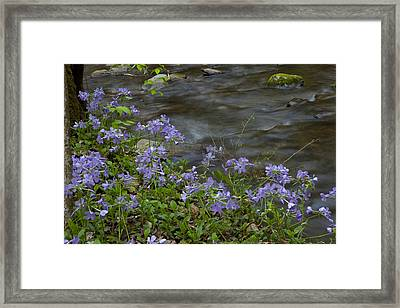 Framed Print featuring the photograph Field Of Purple 3206 by Peter Skiba