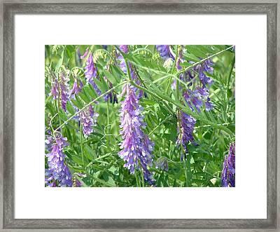 Field Of Purple Dreams Framed Print