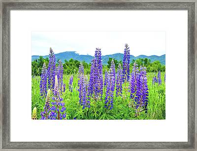 Framed Print featuring the photograph Field Of Purple by Greg Fortier