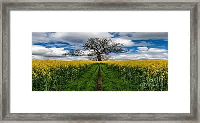 Field Of Rapeseeds Framed Print by Adrian Evans