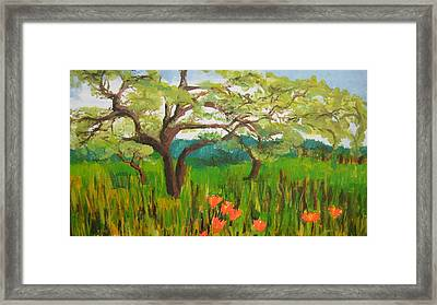 Field Of Red Poppies Framed Print by Mabel Moyano