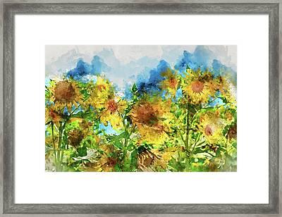 Field Of Sunflowers Framed Print by Brandon Bourdages