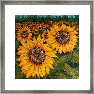 Field Of Sunflowers Framed Print by Heather Assaf