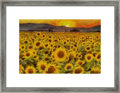 Field Of Sunflowers Framed Print by Mark Kiver