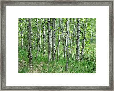 Field Of Teens Framed Print