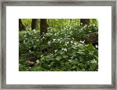 Framed Print featuring the photograph Field Of Trillium 2833 by Peter Skiba