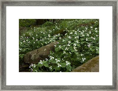 Framed Print featuring the photograph Field Of Trillium 2841 by Peter Skiba