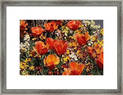 Field Of Tulips Framed Print by Pierre Leclerc Photography