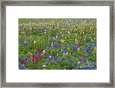 Field Of Wildflowers Framed Print by Greg Vaughn - Printscapes