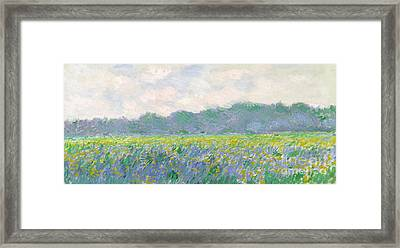 Field Of Yellow Irises At Giverny Framed Print