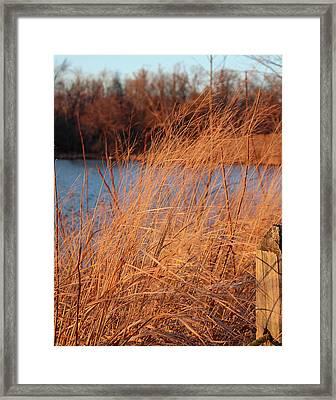 Amber Brush On The River Framed Print