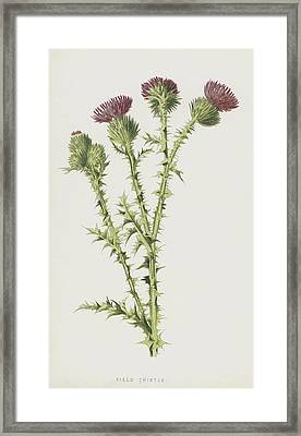 Field Thistle Framed Print
