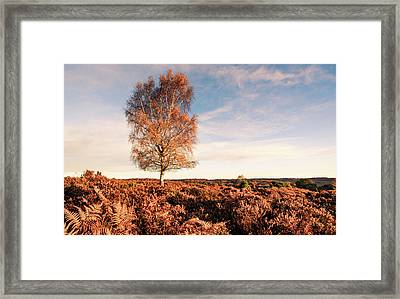 Field Tree Framed Print
