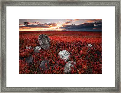 Fields Of Autumn Framed Print by Patrick Downey