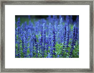 Fields Of Blue Framed Print