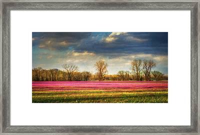 Fields Of Clover Framed Print by James Barber