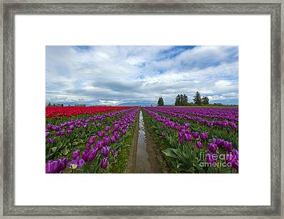 Fields Of Color Framed Print by Mike Dawson