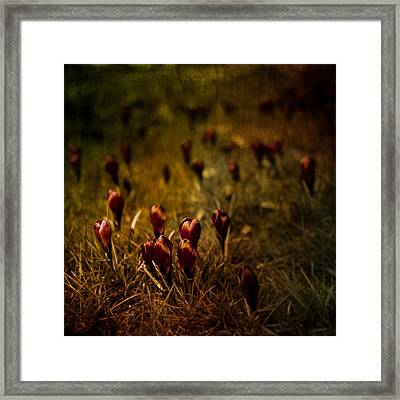 Fields Of Elegance Framed Print by Loriental Photography