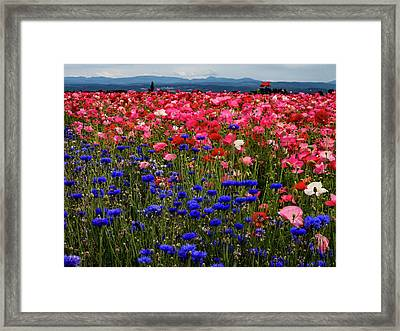 Fields Of Flowers Framed Print by Jean Noren