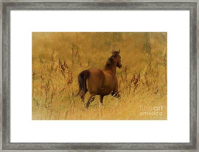 Fields Of Fun Framed Print by Jacque The Muse Photography