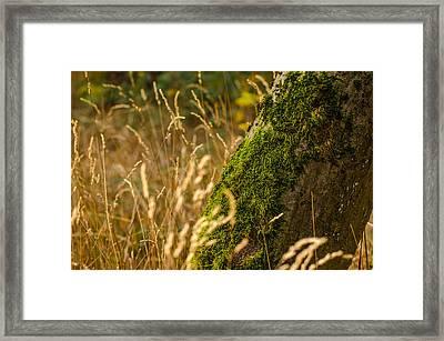 Fields Of Gold Framed Print by Daniel Precht