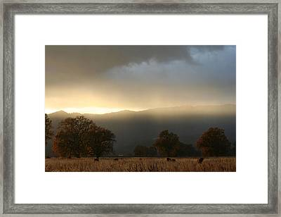 Fields Of Gold Framed Print by Holly Ethan