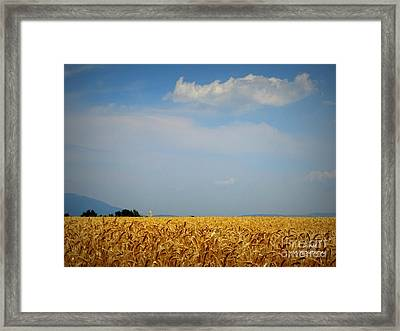 Fields Of Gold Framed Print