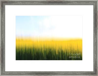Fields Of Gold O1 Framed Print by Steffi Louis