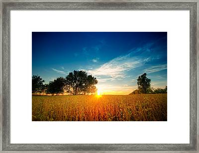Fields Of Gold Framed Print by Ryan Heffron