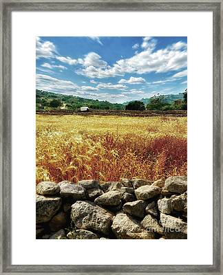 Fields Of Gold Framed Print by Stephan Grixti