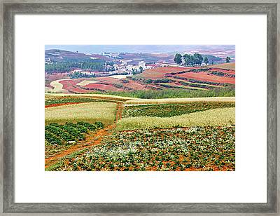 Fields Of The Redlands-1 Framed Print
