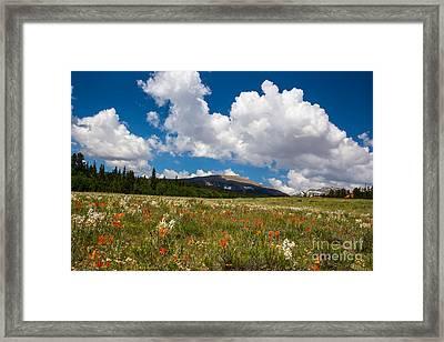 Fields Of Wildflowers Framed Print by Dennis Wagner