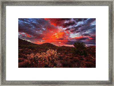 Fierce Beauty Framed Print