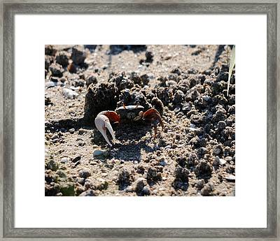 Fierce Fiddler Framed Print