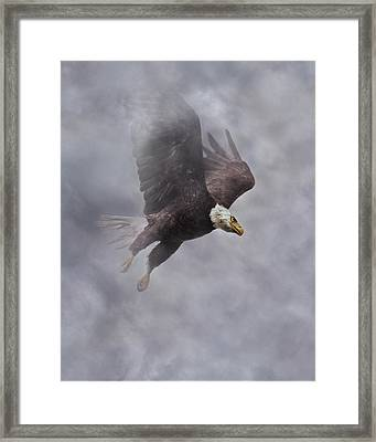 Fierce Pair 1 Of 2 Framed Print by Betsy Knapp