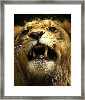 Fierce Framed Print by Wade Aiken