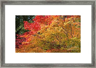 Fiery Autumn Framed Print