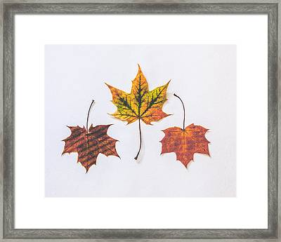 Fiery Beauty Framed Print by Kate Morton
